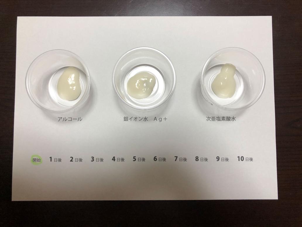 銀イオン水カビ繁殖テスト1日目