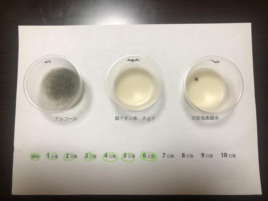 抗菌テスト6日後