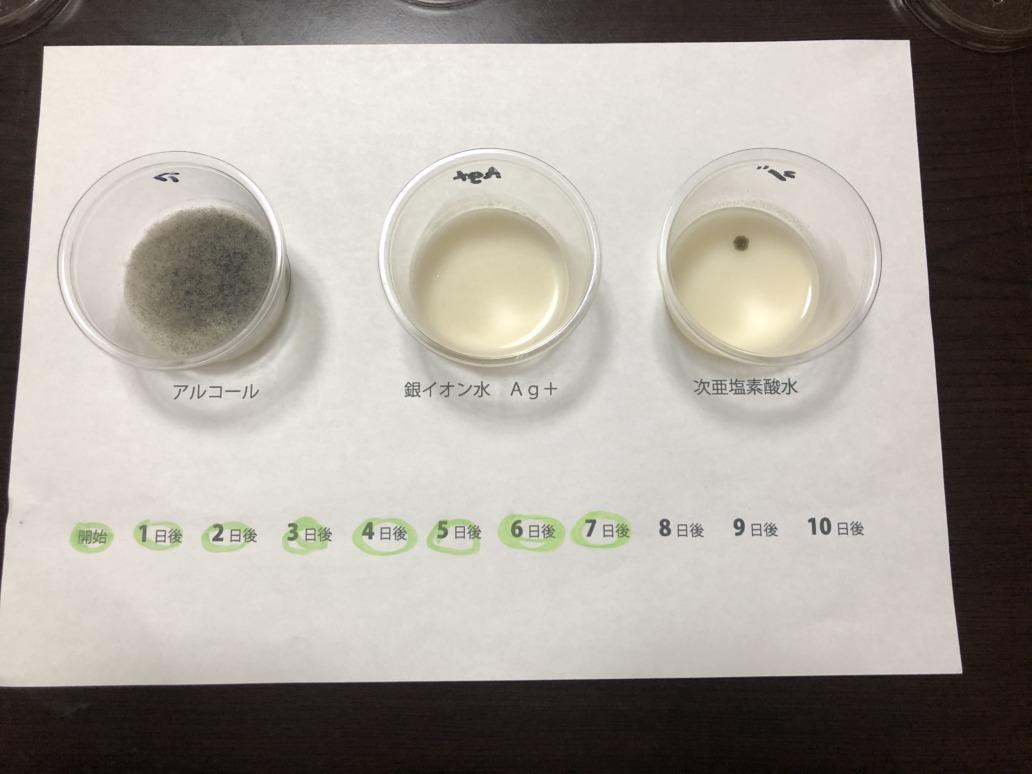 抗菌テスト7日後